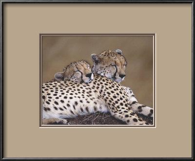 Two Leopards Framed Print